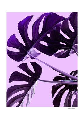 Purple leaves 3500
