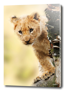 Young Spirit #curioos #wildlife #decor