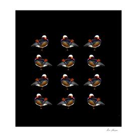 Rainbow ducks
