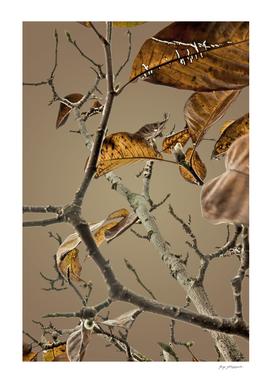 Autumn tree 7000