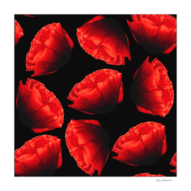 Red flowers P1 5000