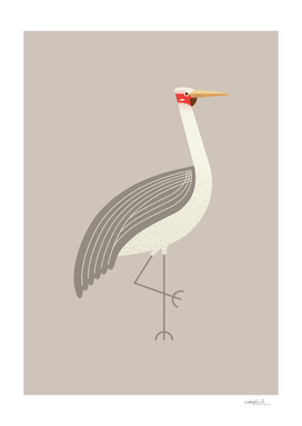 Brolga, Bird of Australia