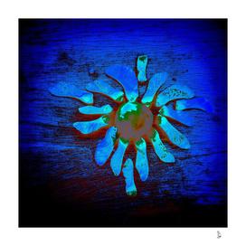 Mandala in  Nature
