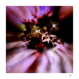Pink flower nights