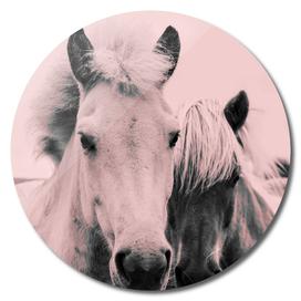 Ponies Pink