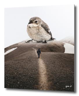 Big Little Bird by GEN Z