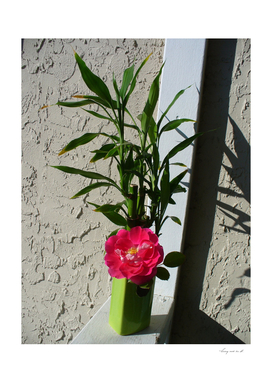 Pink Rose and Bamboo