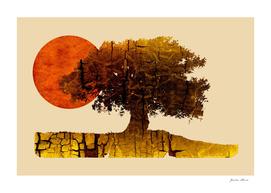 roots & sun