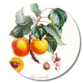 Vintage Apricot