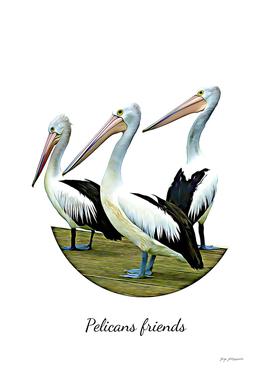 Pelicans Friends BF