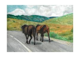 Wild horses on the road
