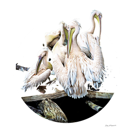 Pelicans A3BF