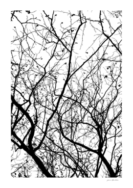 FOLIAGE SERIES Minimal branches in black and white
