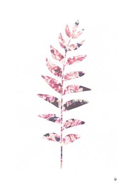 A Single Floral Leaf