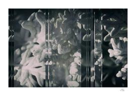 Selenium Seaside Cineraria Collage