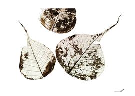 Fallen Leaves #0