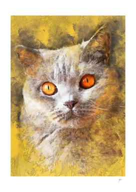 Cat Smokey #cat #kitty