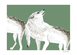 Totem Alaska tundra wolves