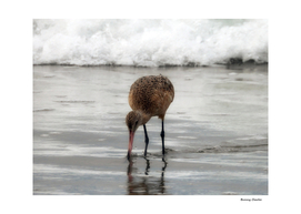 Marbled Godwit Reflections