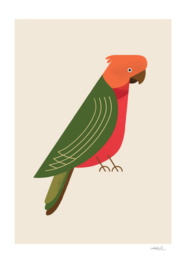 Australian King Parrot, Bird of Australia