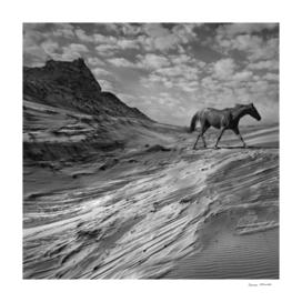 Mustang Mountain