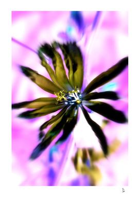 autum flower