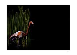 59 - Kerala flamingo