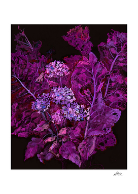 Hydrangea and Horseradish, Black & Purple
