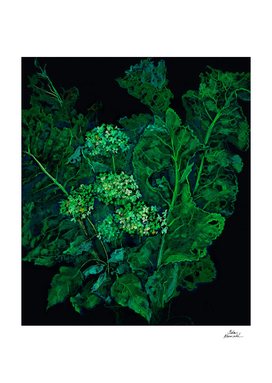 Hydrangea and Horseradish, Black and Green