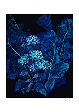 Hydrangea and Horseradish, Blue and Black