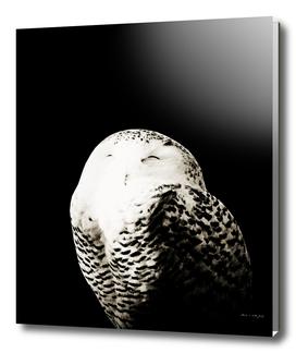 Snow Owl #1 #animal #decor #art