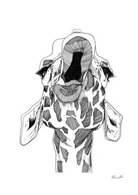 mouthy giraffe