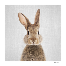 Rabbit - Colorful