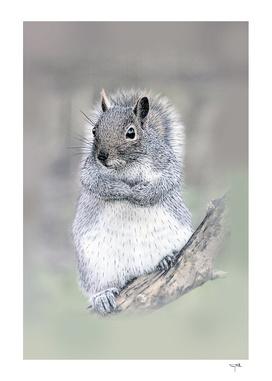 The curios Grey Squirrel.