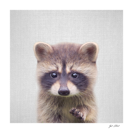 Raccoon - Colorful