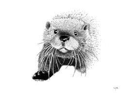 The inquisitive Otter