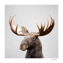 Moose - Colorful