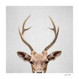 Deer - Colorful