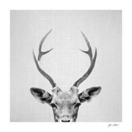 Deer - Black & White