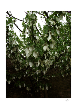 White floral canopy