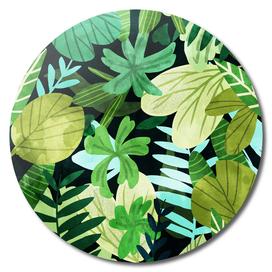 Rainforest II