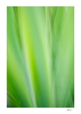 Iris impression