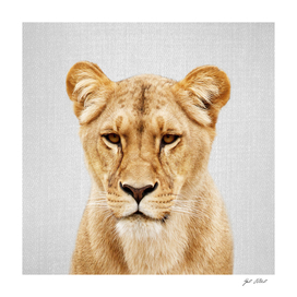 Lioness - Colorful