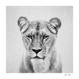Lioness - Black & White