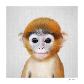 Baby Monkey - Colorful