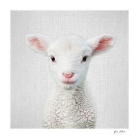 Lamb - Colorful