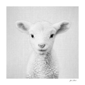 Lamb - Black & White
