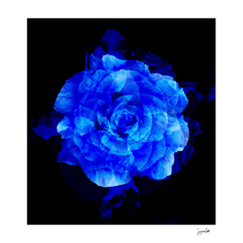 Blue Rose Abstract