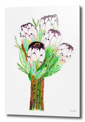 White proteas