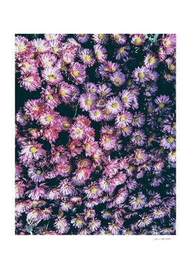 Autumnal daisies bouquet